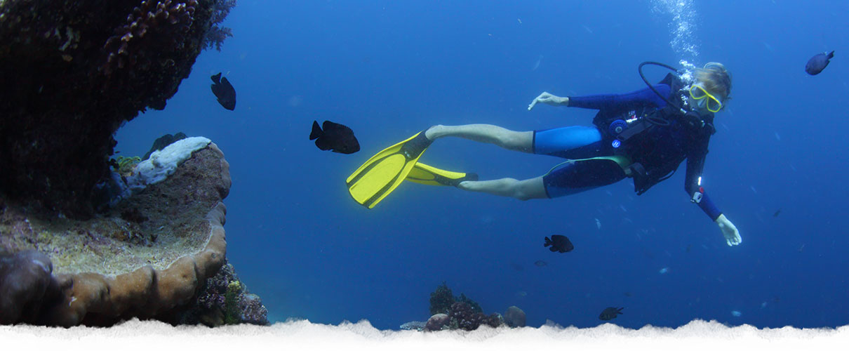 Amazing Diving in the reef Belize